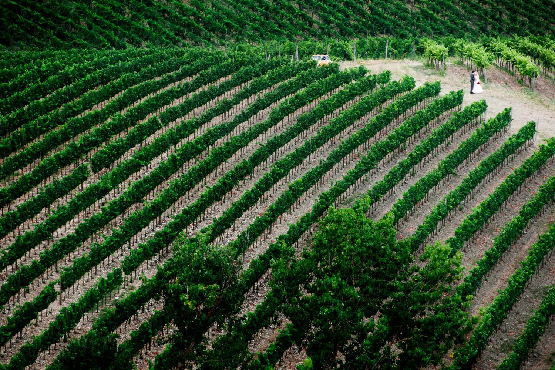 vineyard wedding san Gimignano